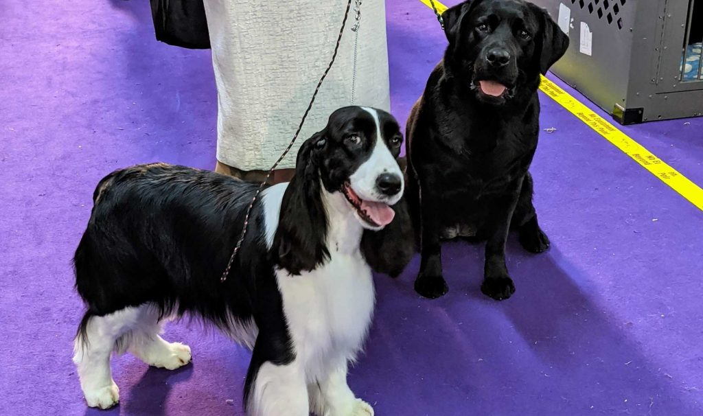 The 144th Westminster Kennel Club Dog Show, Part Two