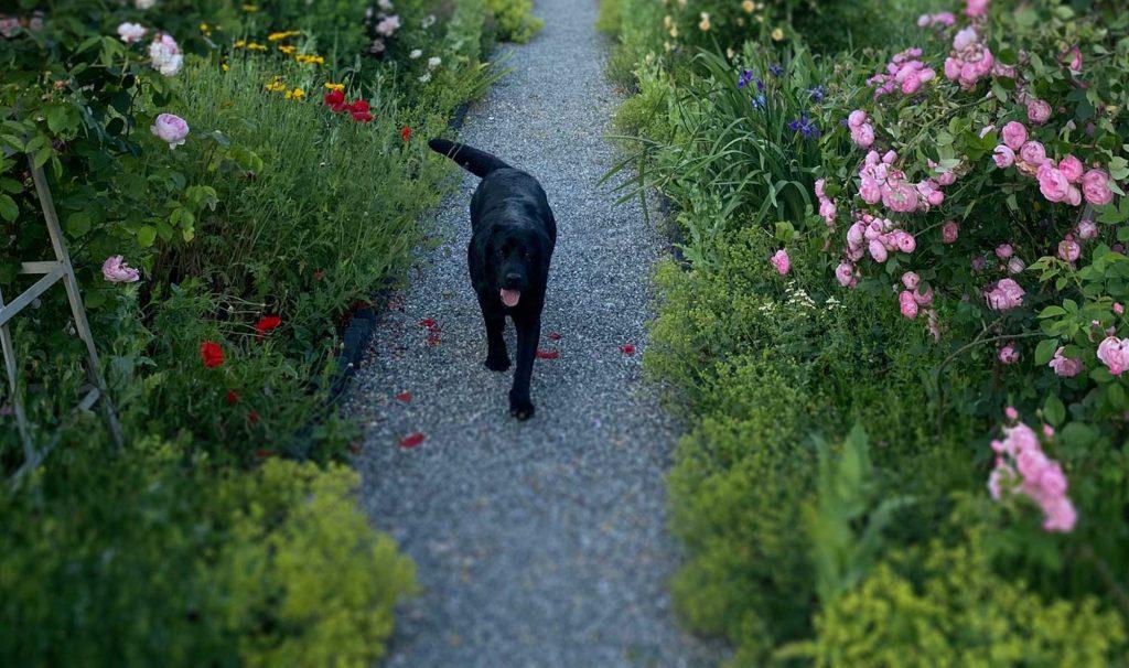 A Martha Stewart Guest Blog from Ari Katz on His Gardens