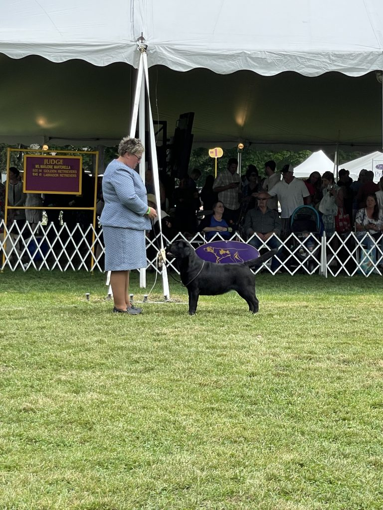 The 145th Westminster Kennel Club Dog Show, Part Two